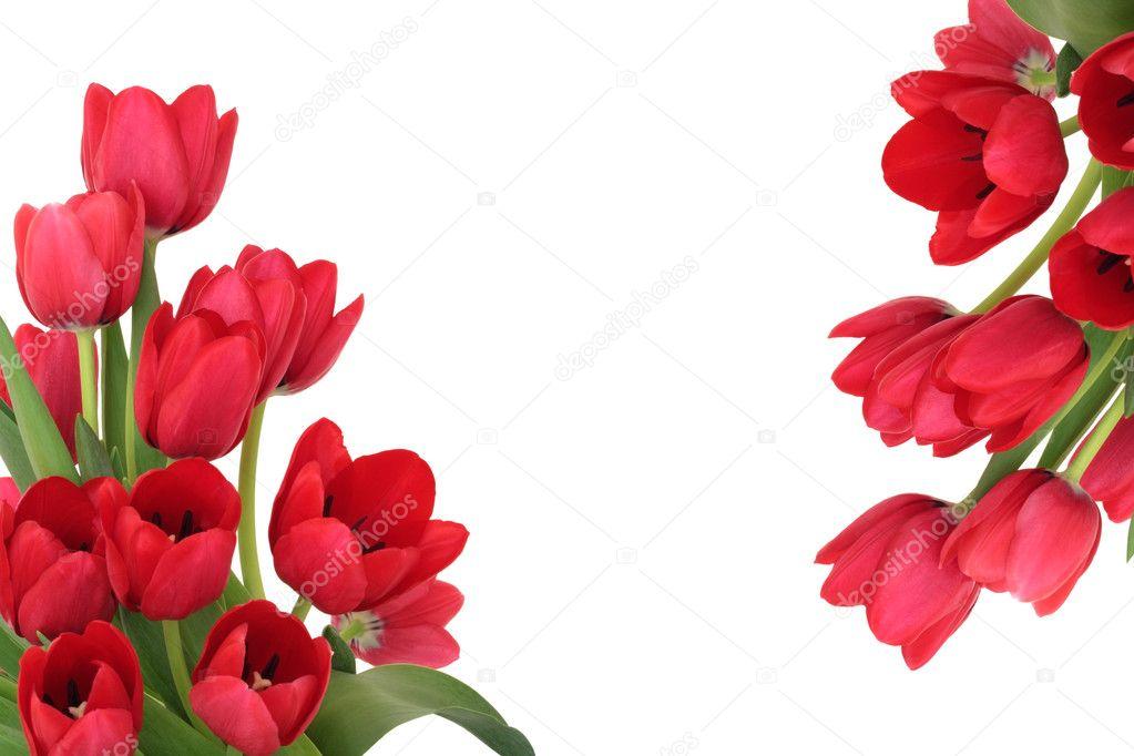 Red Tulip Flower Border