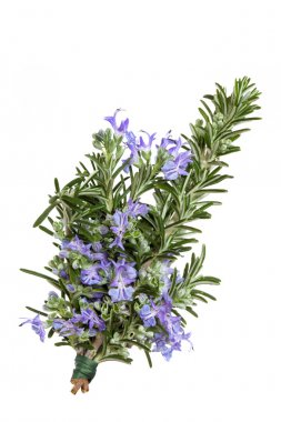 Rosemary Herb in Flower