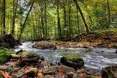 malé Lesní řeka