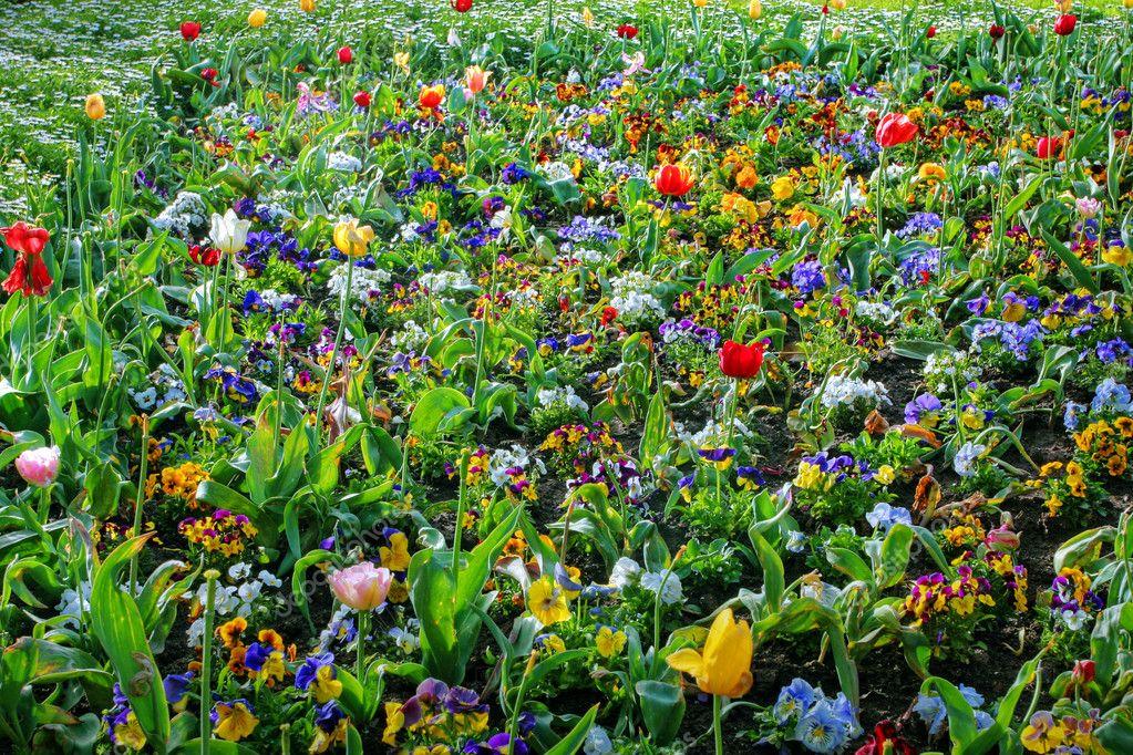 Giardino colorato u foto stock cmeder