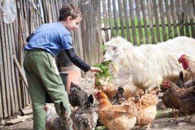 Country boy feeding the animals