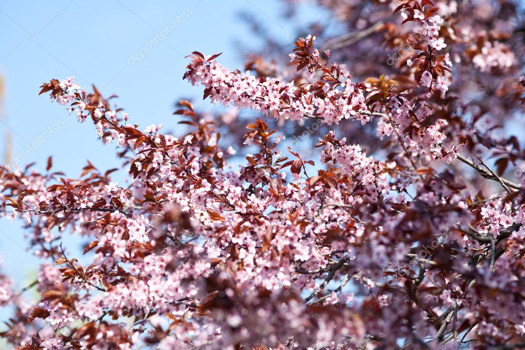 Little spring flowers in a tree