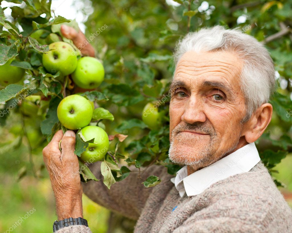 Old farmer and apple tree