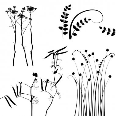 Collection, for designers, plant vector