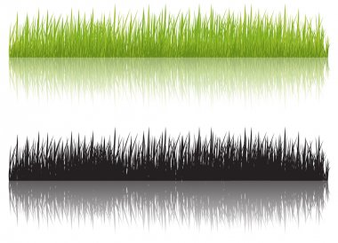 Grass, vector illustration
