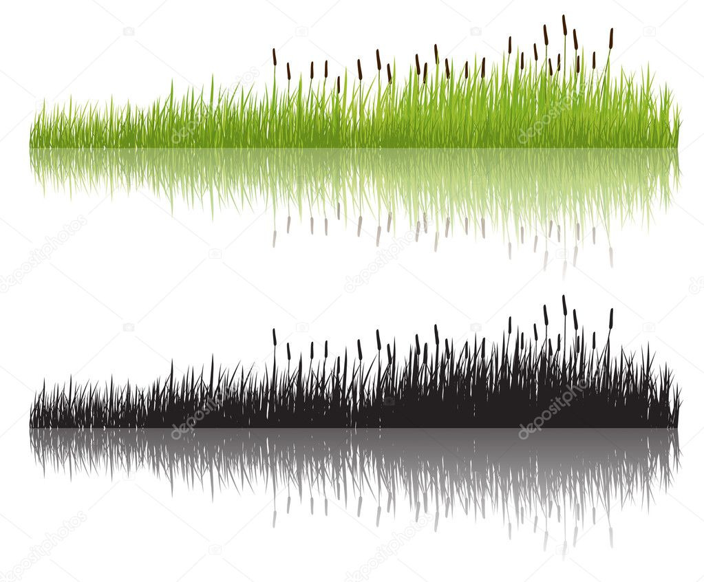 Grass, vector illustration