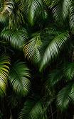 Landscape of rain forest