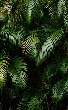 "Картина, постер, плакат, фотообои ""Ландшафт тропических лесов"", артикул 2883012"