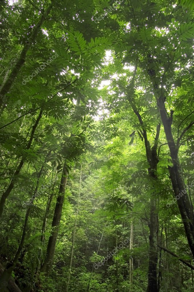 Фотообои Green forest