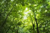 Fotografie Forest sunlight