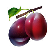 Photo Vector plums