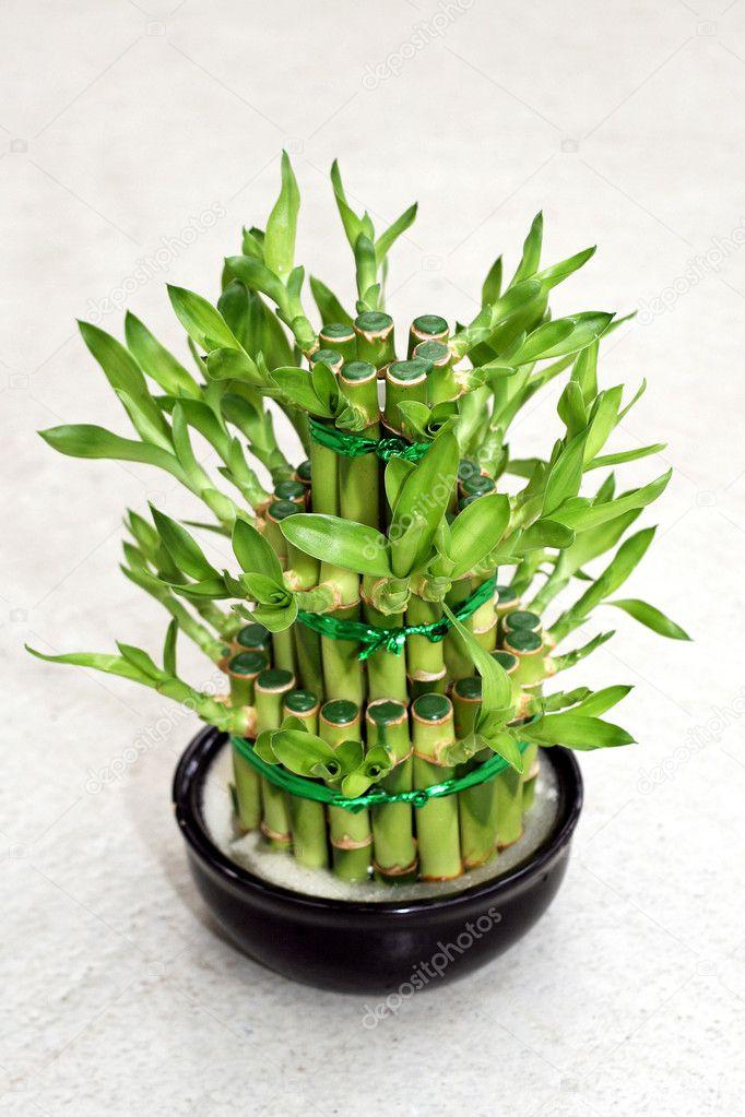 Bamboe plant stockfoto baloncici 3162126 for Bamboe plant