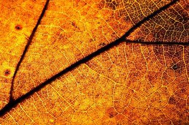 Macro shot of the autumn leaf stock vector