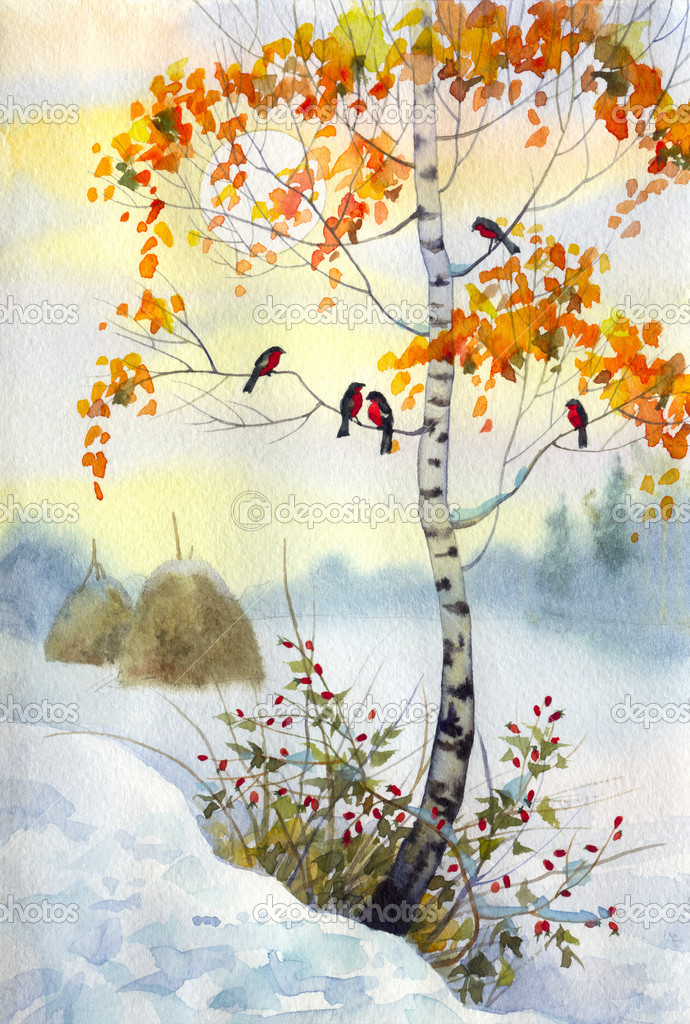 Bullfinch on the birch