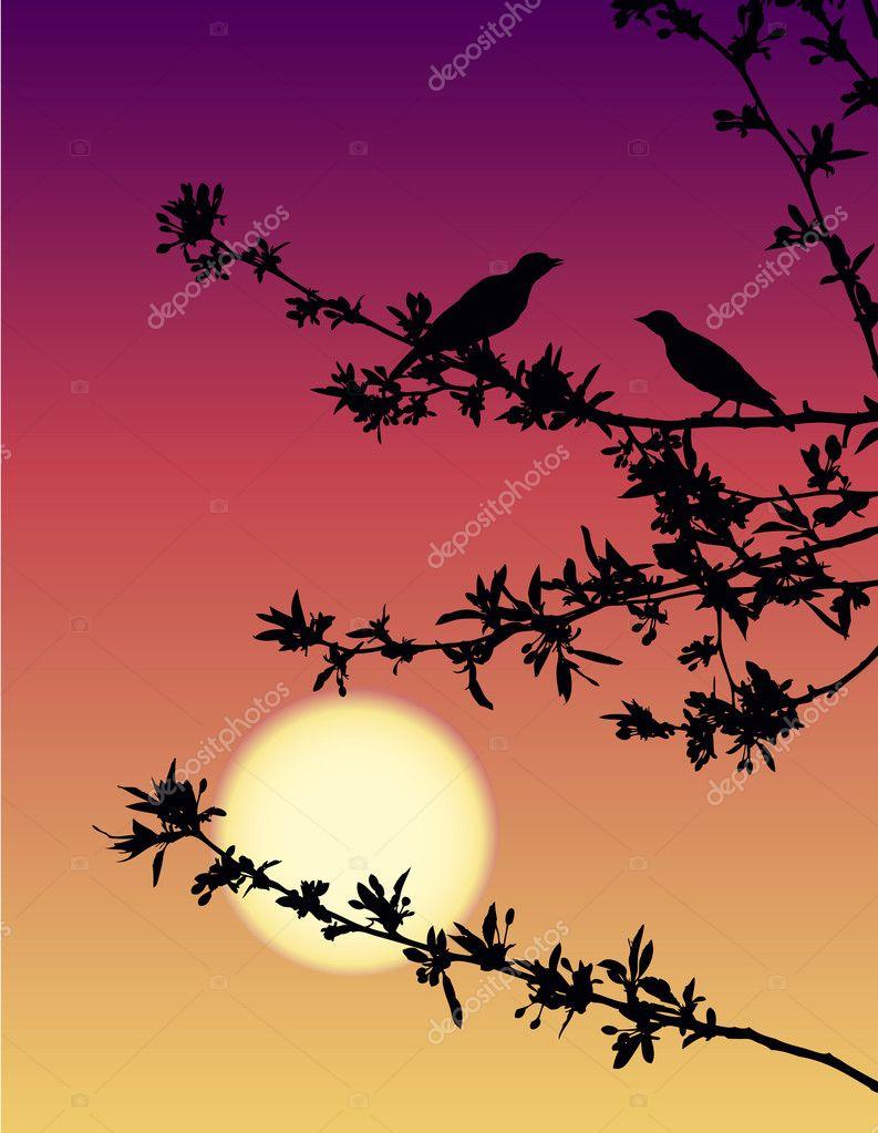 Nightingales at sunset
