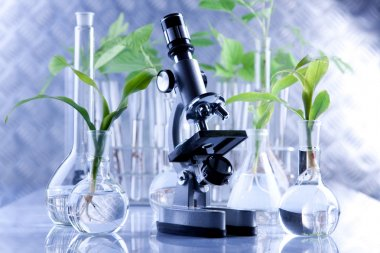 Green Seedling and microscope in laboratory