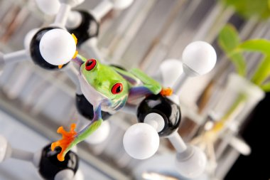 Green frog in laboratory