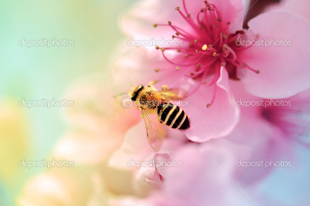 Colourful Blooms and honey bee
