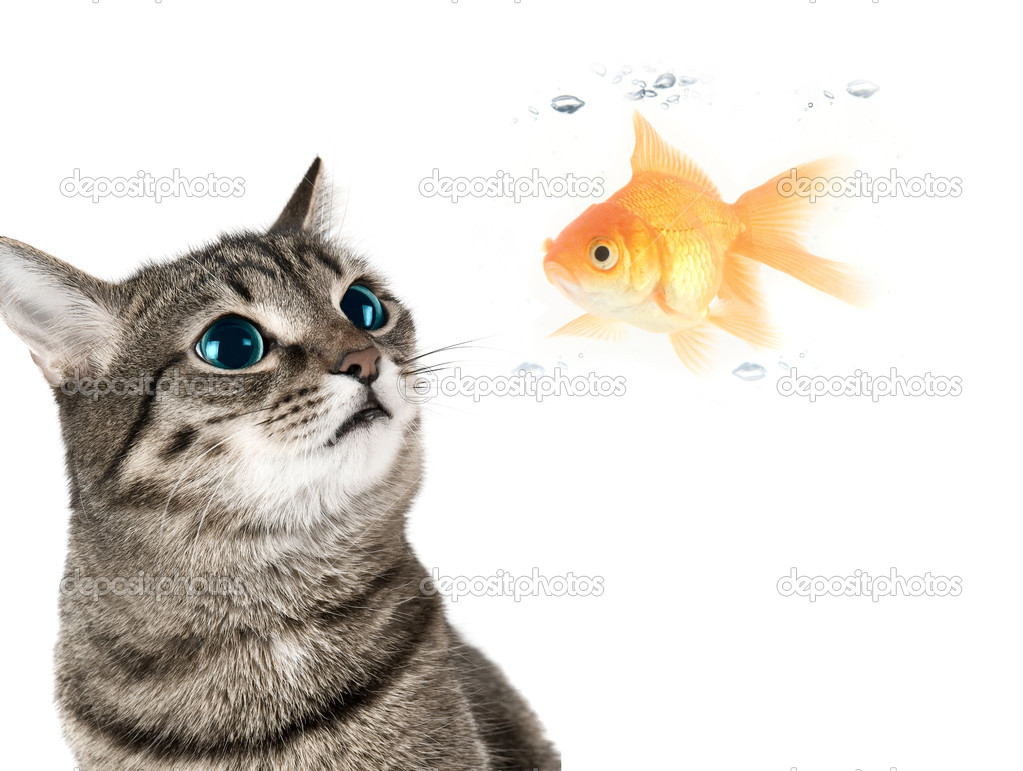 Cat and fish stock photo olinchuk 2746399 for Fish video for cats