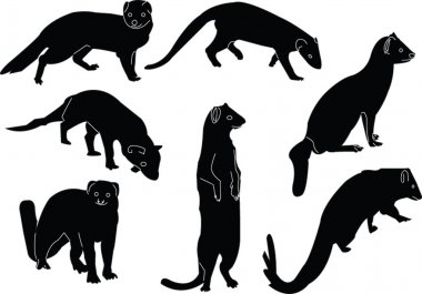 Mongoose collection illustration - vector