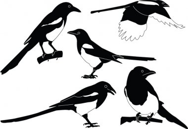 Magpies collection