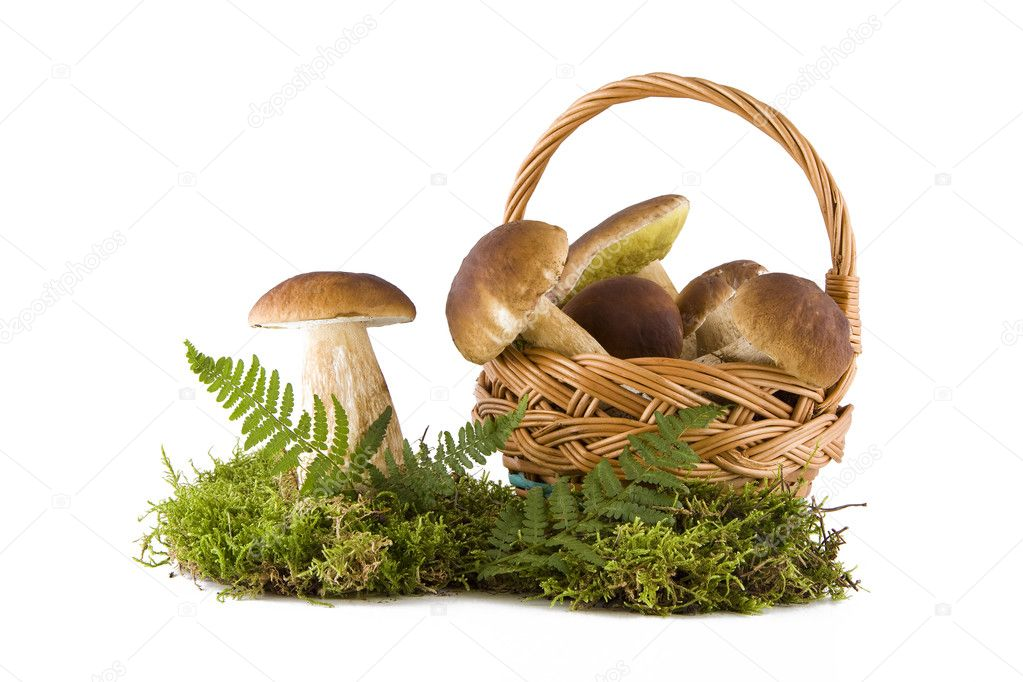 Boletus mushrooms in and out the basket