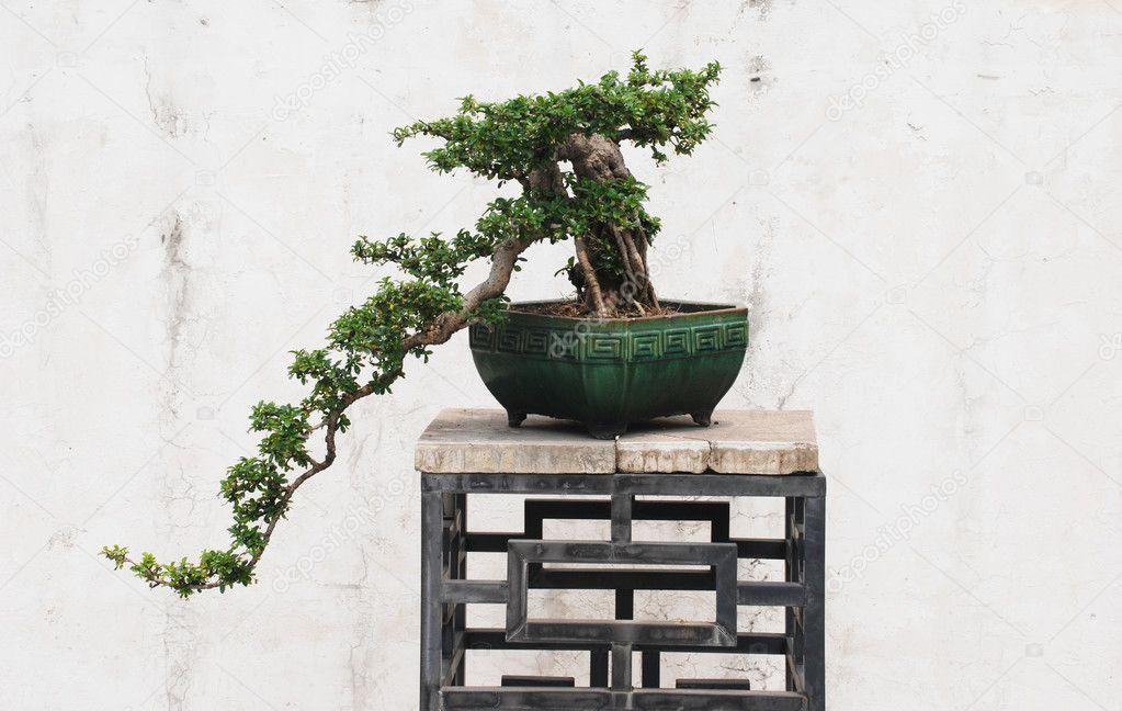 The Chinese Banyan Tree Bonsai In Ceramic Pot Stock Photo C Donkeyru 2990814