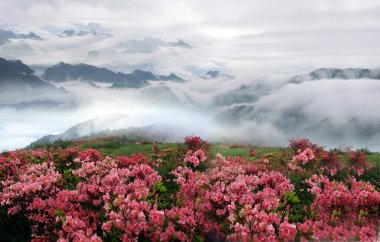 Spring misty mountain landscape with peach flowers