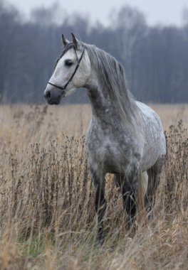 Grey Horse in the late autumn