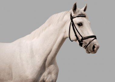 White horse on grey background
