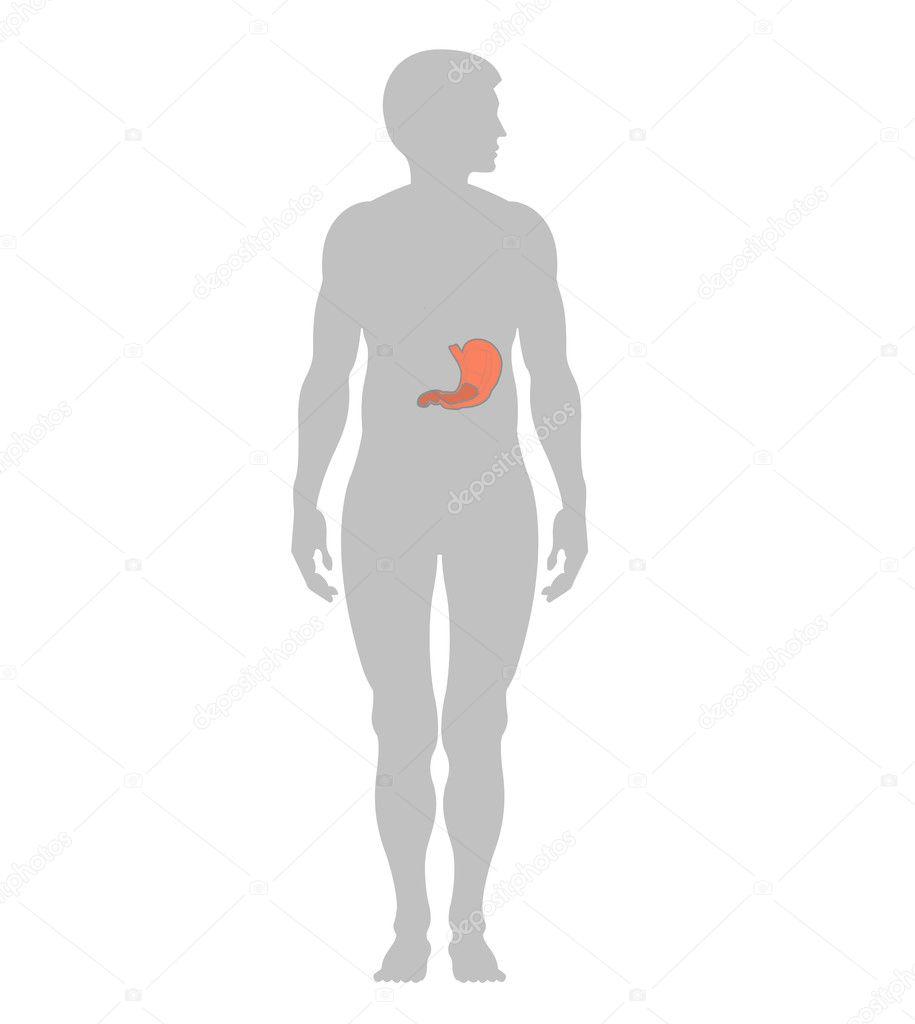 Menschlicher Magen und Kontur eines Mannes — Stockfoto © siart1 #2861524