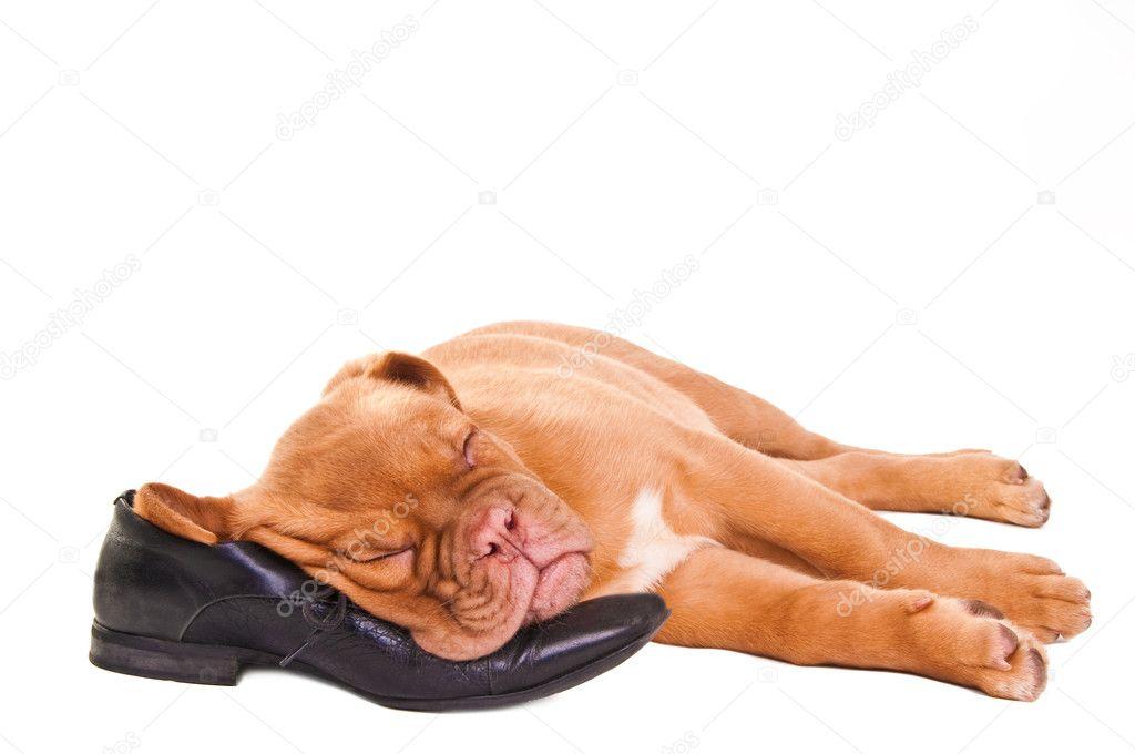 автобус, поезд, собака спит на обуви яны