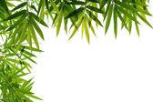 bambusových listů