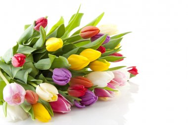 Bouquet of colorful Dutch tulips