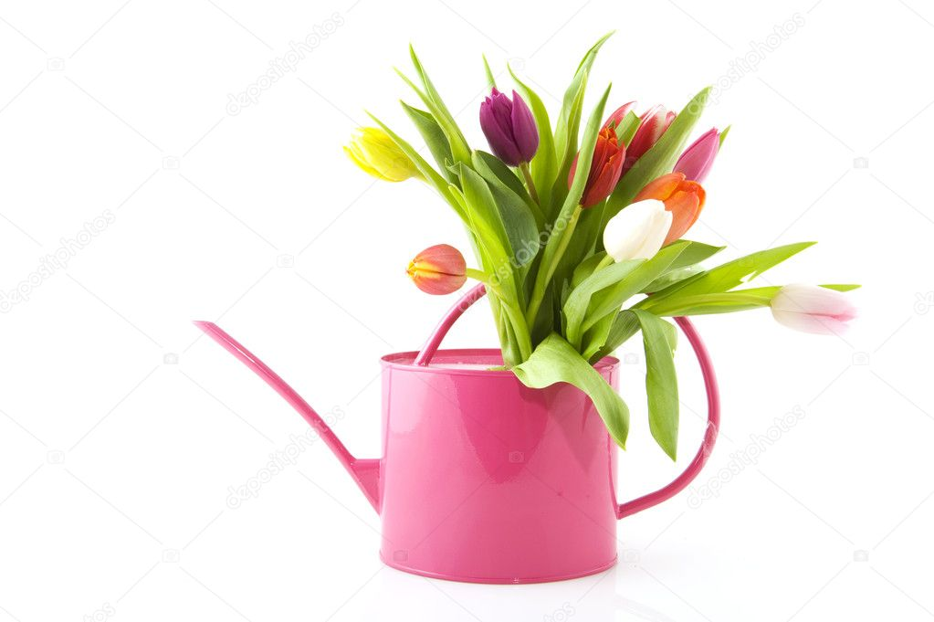 Spring flowers in watering can