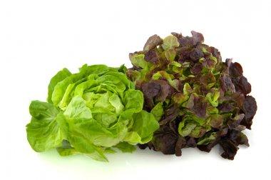 Lettuce assortment