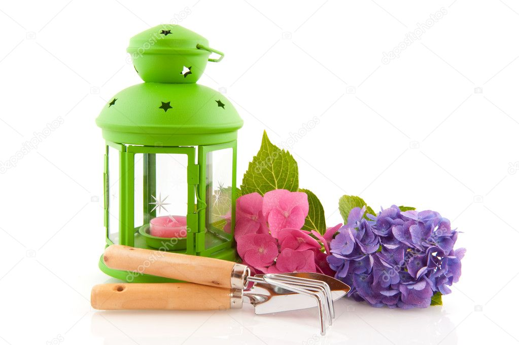 Hydrangea and gardening tools with green lantern
