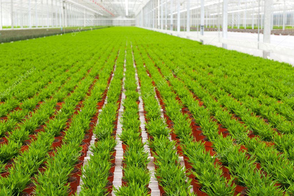 estufa com muitas plantas de bambu — Stock Photo © ivonnewierink ...