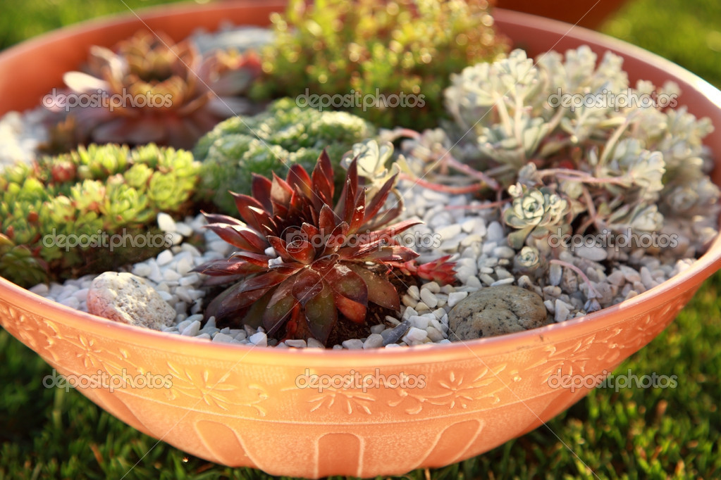 Superb Beautiful Rock Garden Cultivated In Small Basin Or Roof Gardening U2014 Photo  By Brebca