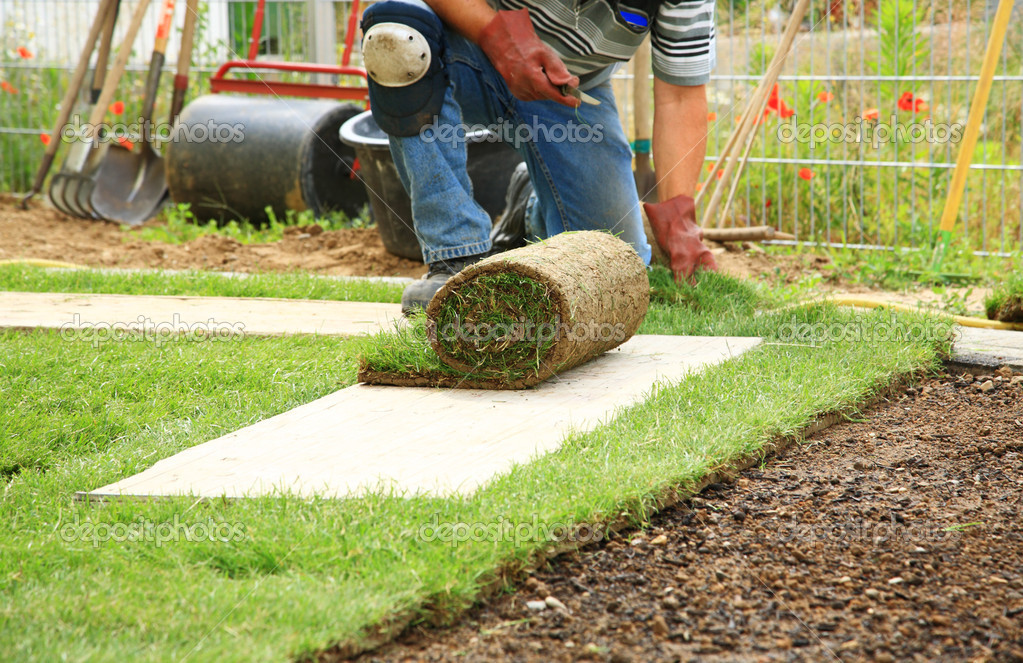 Laying sod for new lawn