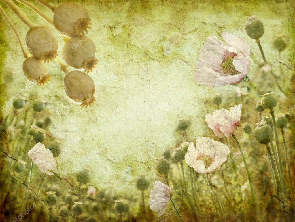 Grunge image of poppies