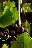 vinná réva a červené víno detail