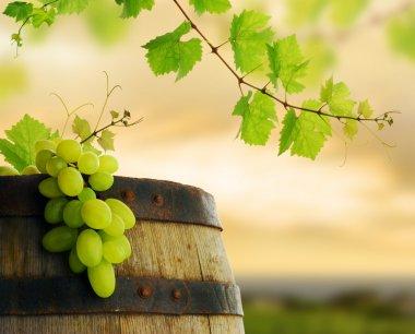 Wine barrel, grape and grapevine