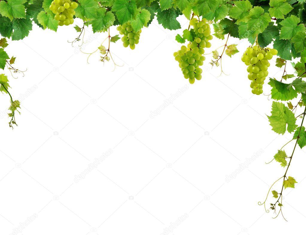 frische Weinrebe frame — Stockfoto © Miiisha #2777359