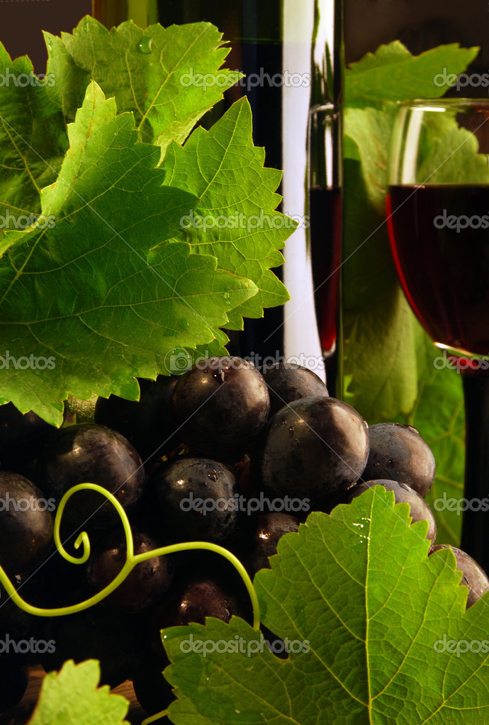 Grapevine and red wine detail