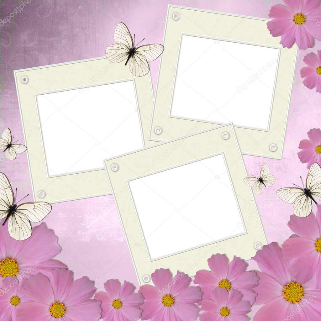 Three white frames on background with pink daisy and butterfly ...