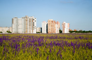 Modern houses and purple flowers