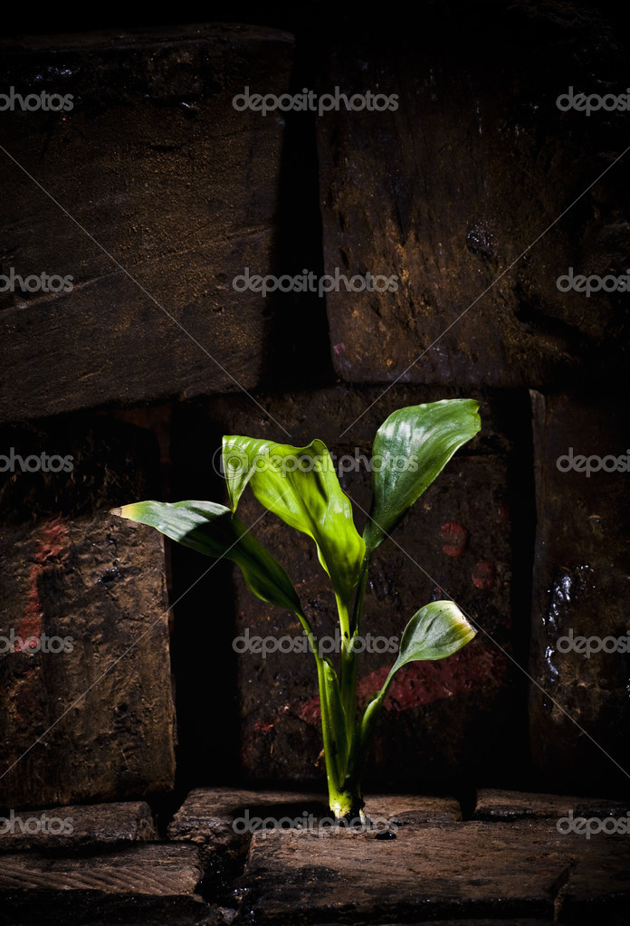 Plant growing trough dead ground