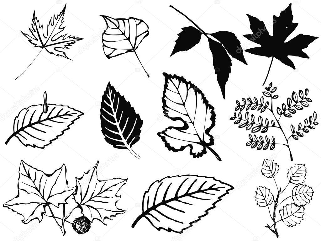 Set of various leaves