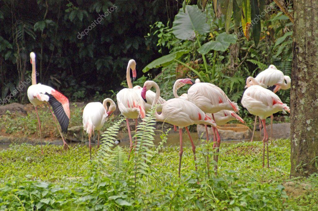 Flamingo, Pink Flamingo, Flight of the Flamingo... Borneo.